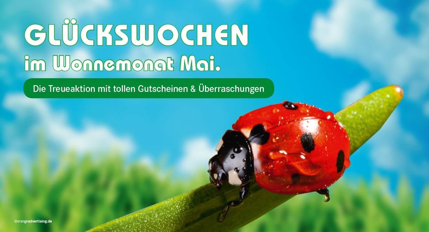 Mailing mit Marienkäfer – Glückswochen im Mai